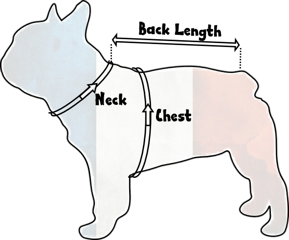 Frenchie Size Guide