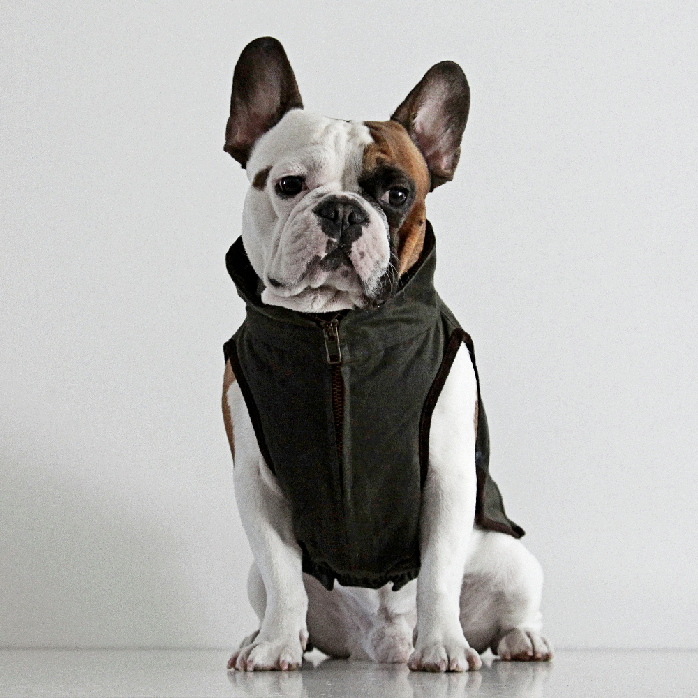 french bulldog jacket windsor jacket for french bulldog dogissimo 2680