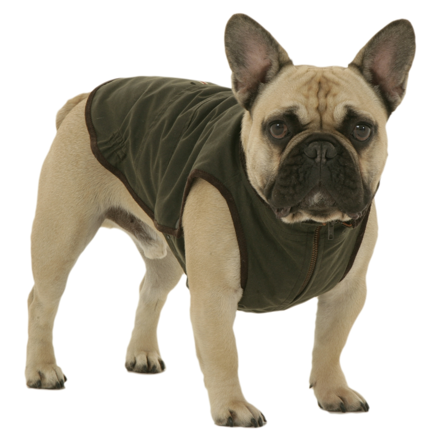 french bulldog jacket windsor jacket for french bulldog dogissimo 695