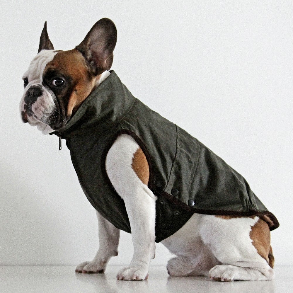french bulldog jacket windsor jacket for french bulldog dogissimo 588