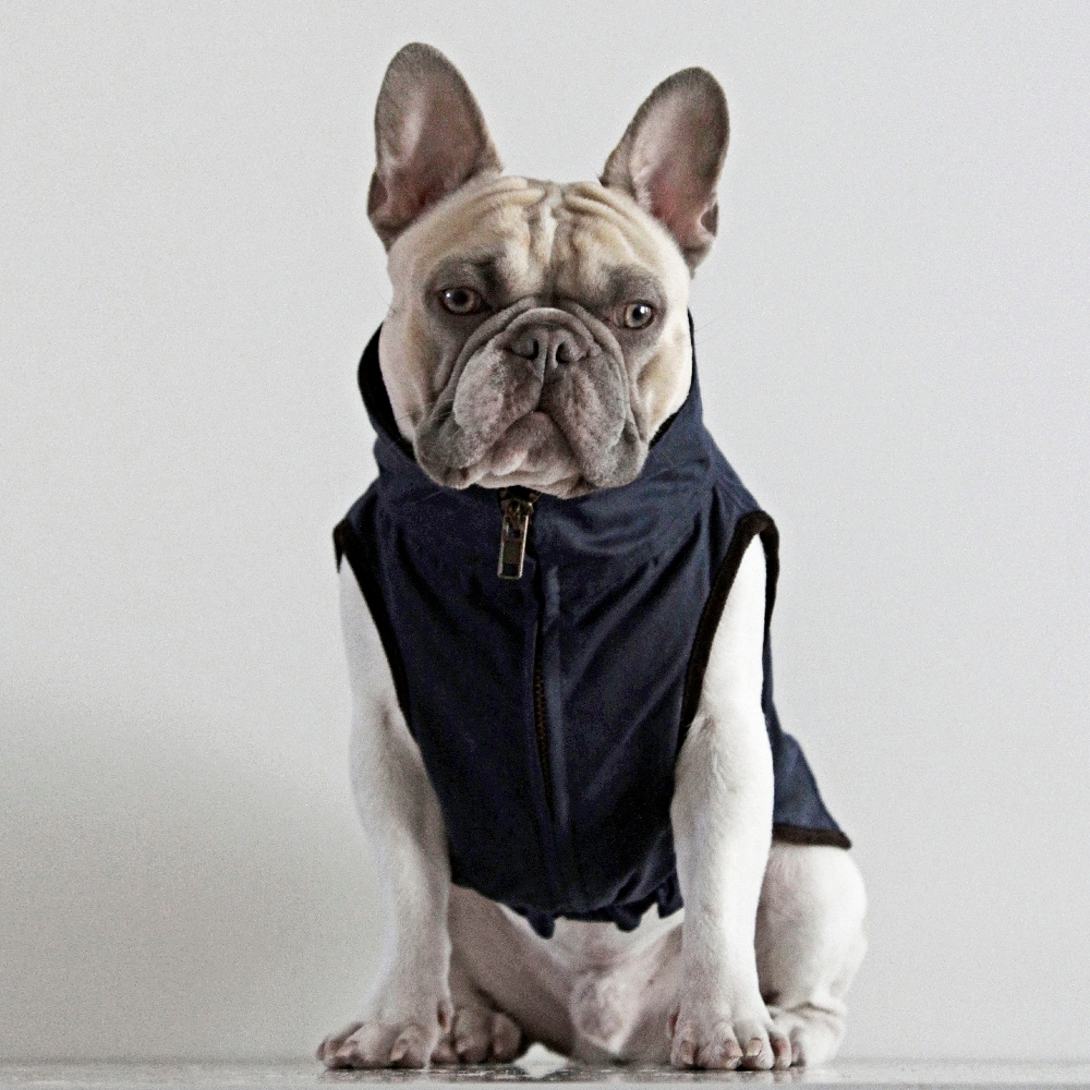 french bulldog jacket windsor jacket for french bulldog navy dogissimo 6307
